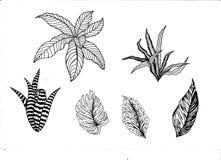 Planterar illustrationen Fotografering för Bildbyråer