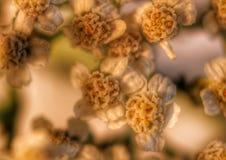Planterar liten art Arkivbild