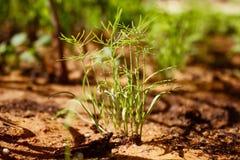 planterar litet fotografering för bildbyråer