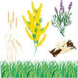 planterar olikt Arkivfoto