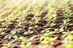 Planterar plantor under solljuset Arkivbilder