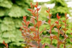 planterar red Royaltyfria Foton
