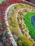 planterar regnbågen fotografering för bildbyråer