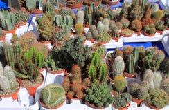 planterar suckulent Arkivbild