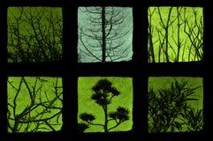 planterar trees