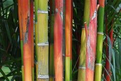 planterar trees royaltyfria foton