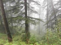 planterar trees arkivfoto