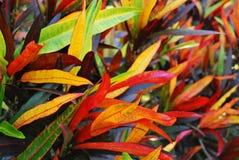 planterar tropiskt arkivfoto