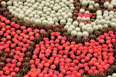 planterar tropiskt Royaltyfri Foto