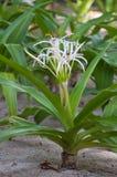 planterar tropiskt Royaltyfri Bild