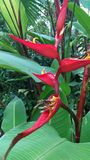 planterar tropiskt Royaltyfria Foton