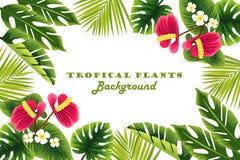 planterar tropiskt Ram Bakgrund Ram vektor illustrationer