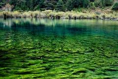 planterar undervattens- Arkivbild