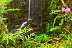 planterar vattenfallet Arkivfoton