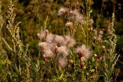 planterar wild arkivbild