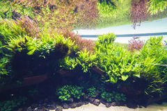 Planterat akvarium Royaltyfri Bild