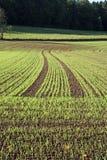 planterat fält Arkivfoton