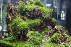 Planterat sötvattens- akvarium royaltyfri foto