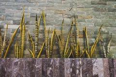 plantermoment stenar väggen Royaltyfri Fotografi