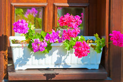 Planters with pink flowers on the windowsill Royalty Free Stock Photography