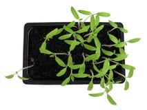 Plantes 1 Photographie stock libre de droits