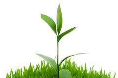 Plantes image libre de droits