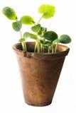 Plantes Photographie stock libre de droits