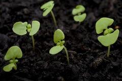 Plantes Photos libres de droits
