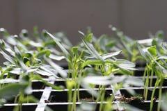 Plantes Photographie stock