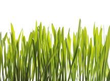 Plantes Photo stock