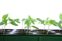 Plantes photos stock