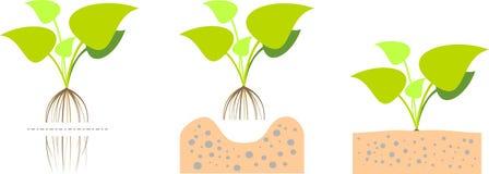 Plantes aquatiques Images stock