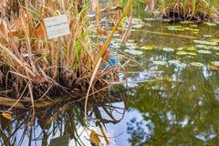 Plantes aquatiques avec le jardin botanique de connexion d'espèces photographie stock