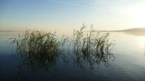 Plantes aquatiques hors du lac par Sajkod, Hongrie Photo stock