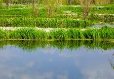 Plantes aquatiques sur le lac Erhai Images stock