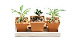Plantes cultivées dans des pots petits pour la maison et le jardin photo stock