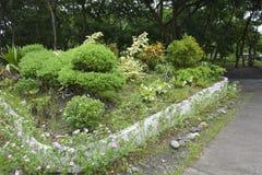 Plantes cultivées dans les lieux du Hall municipal de Matanao, Davao del Sur, Philippines photos libres de droits