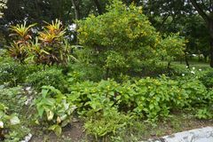 Plantes cultivées dans les lieux du Hall municipal de Matanao, Davao del Sur, Philippines photo libre de droits