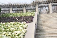 Plantes cultivées sur les étapes Photos libres de droits