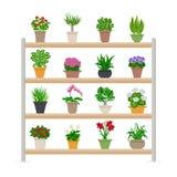 Plantes d'intérieur sur l'illustration d'étagères Images stock