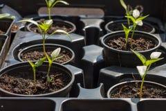 Plantes dans des bacs Photographie stock