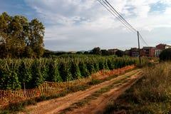Plantes de haricot de jardin images libres de droits