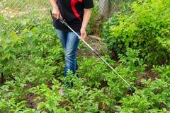 Plantes de pommes de terre protectrices de la maladie fongique ou vermine avec des RP photo libre de droits