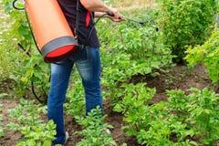 Plantes de pommes de terre protectrices de la maladie fongique ou vermine avec des RP images stock