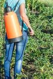 Plantes de pommes de terre protectrices de la maladie fongique ou vermine avec des RP photographie stock libre de droits