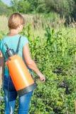 Plantes de pommes de terre protectrices de la maladie fongique ou vermine avec des RP image stock