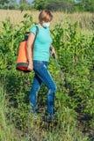 Plantes de pommes de terre protectrices de la maladie fongique ou vermine avec des RP photo stock