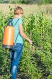 Plantes de pommes de terre protectrices de la maladie fongique ou vermine avec des RP photos libres de droits