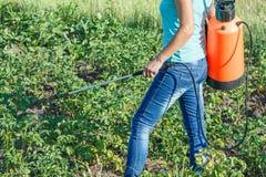 Plantes de pommes de terre protectrices de la maladie fongique ou vermine avec le pulv?risateur de pression photos libres de droits