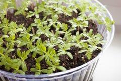 Plantes des fleurs Images libres de droits